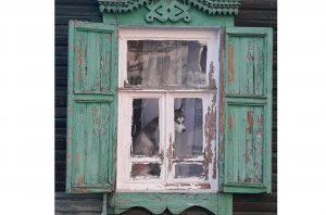 Фото дня: одинокий хаски на карнизе за окном