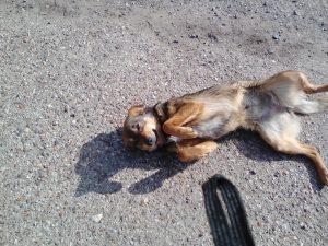 В одном из микрорайонов Астрахани неизвестные расстреляли бродячих собак