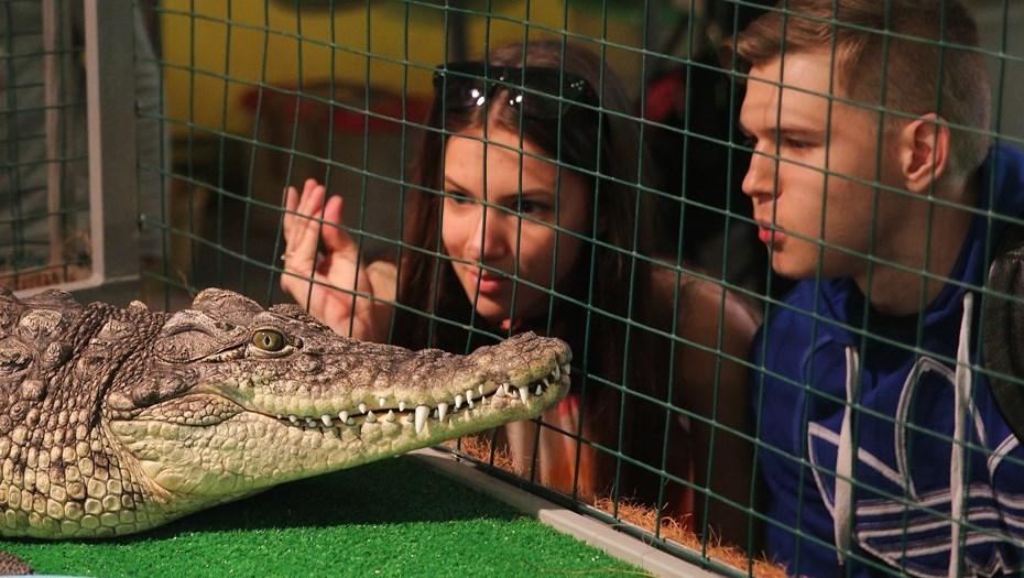 Медведев запретил россиянам держать дома змей, крокодилов и других хищников