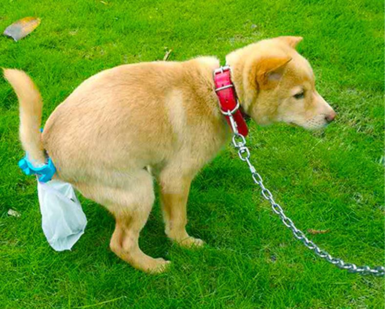 Астраханцев заставят убирать продукты жизнедеятельности за собаками