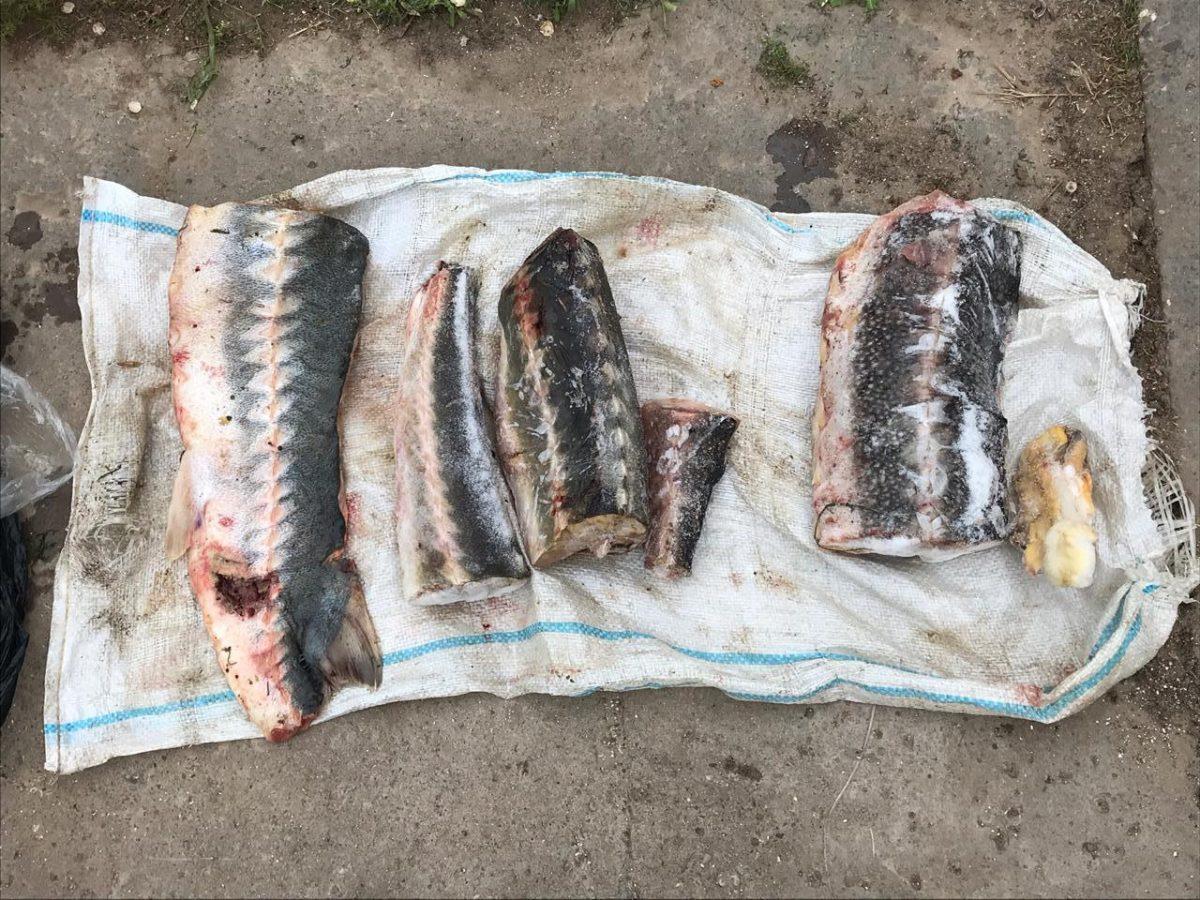 В селе Вышка пограничники накрыли контрабандистов с черной икрой