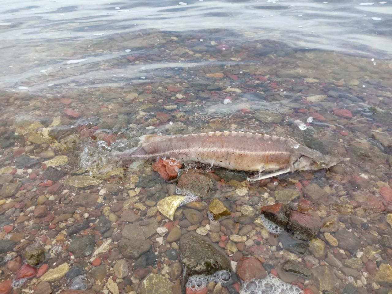 уже бывала картинки рыбы на средней волге вот