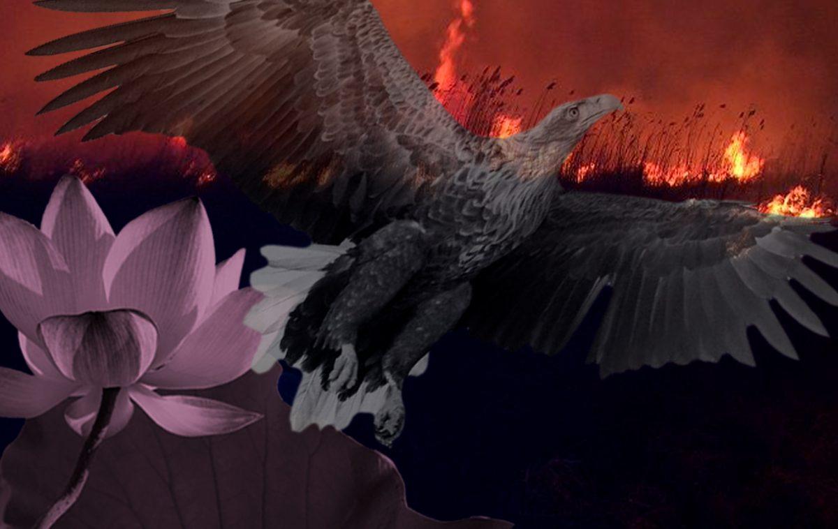 Красно-черная Дельта: почему каждый год сгорает почти все и как Астраханскому заповеднику удается противостоять огню