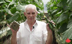 Житель Астраханской области выращивает огурцы в минеральной вате