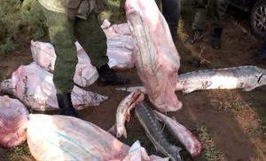 Астраханская группировка браконьеров в полном составе отправилась в колонию