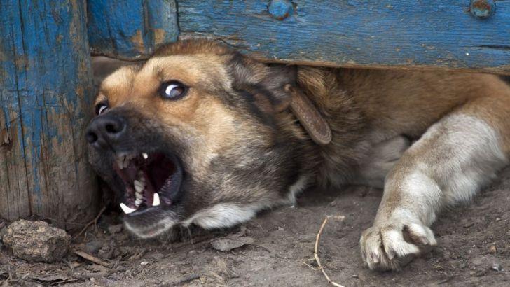Жители села Яксатово просят решить проблему бродячих собак