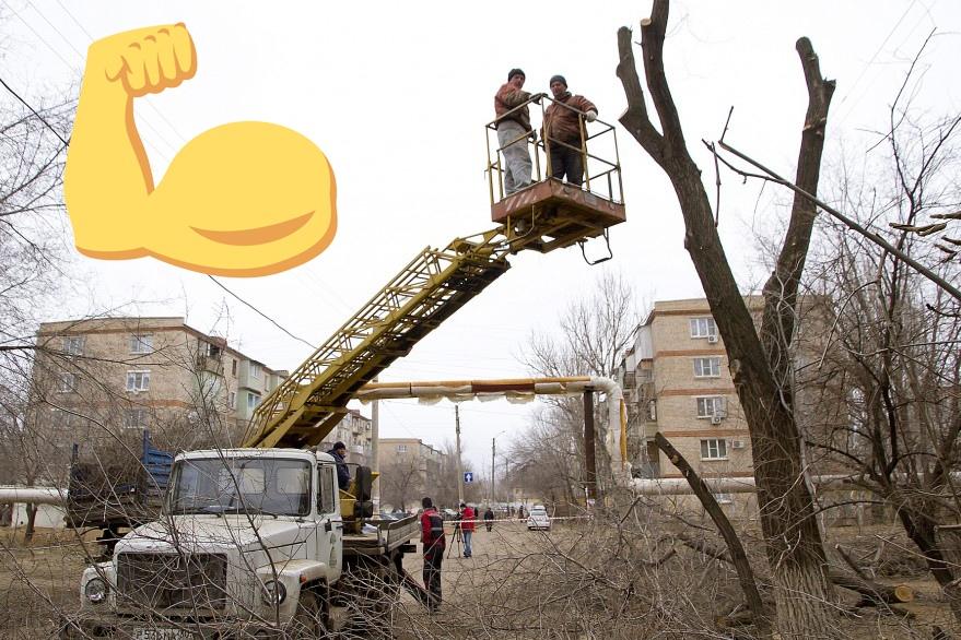 Представлен новый график опиловки деревьев в Астрахани