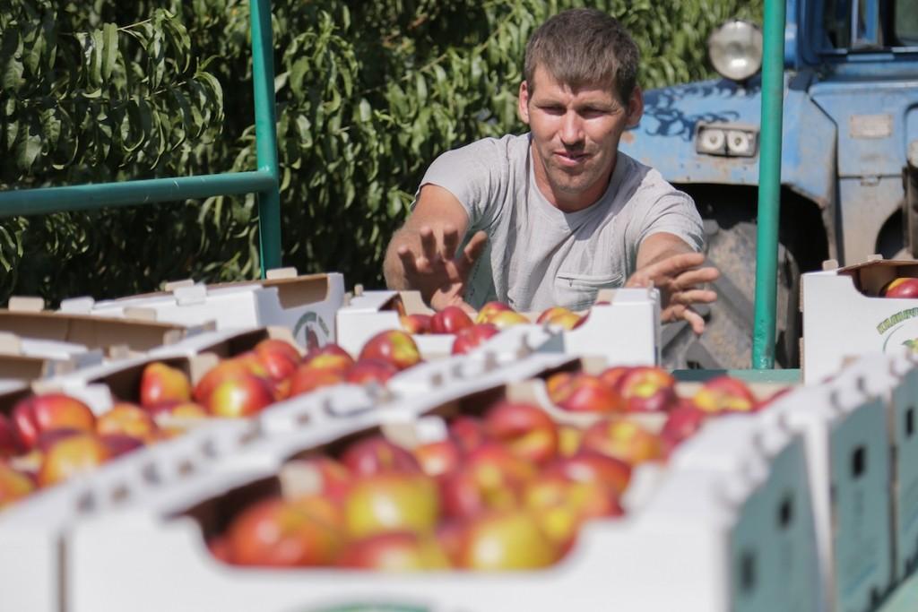 Ученые помогут возродить садоводство в Астраханской области