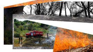 Карта, шланги, столп огня. Как астраханская журналистка тушила пожары с добровольцами