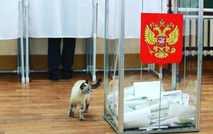 Выборы в регионах России не принесли ни одной сенсации