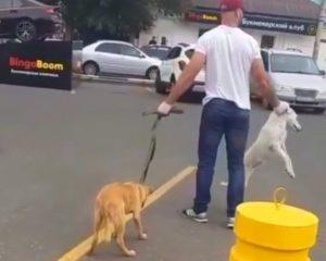 Собак из центра Астрахани вывезли перед инаугурацией губернатора