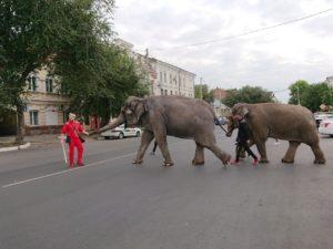 Слоны на улице и леопард в такси: дни Африки в Астрахани