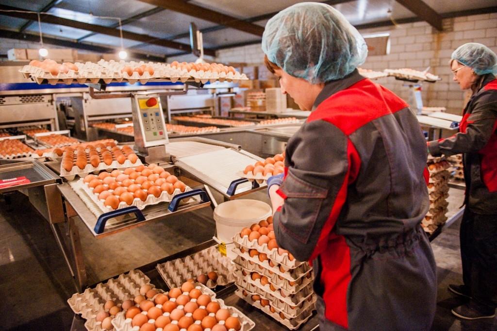 Астраханские птицефабрики произвели уже 300 млн штук яиц