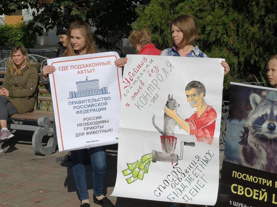 Астраханские зоозащитники потребовали перестать убивать бродячих собак