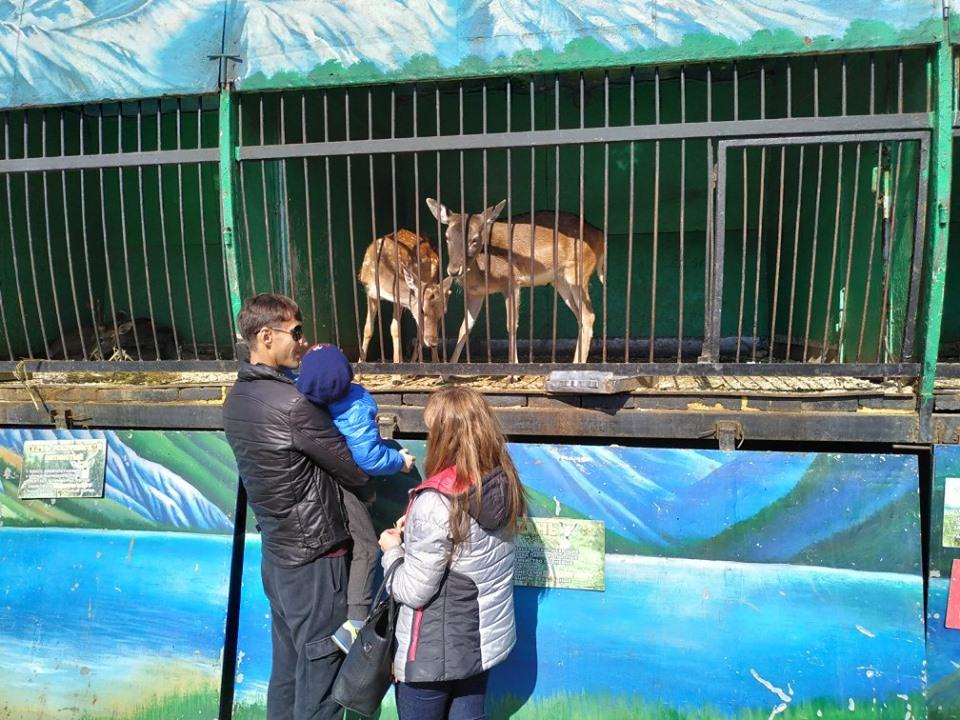 Астраханские зоозащитники требуют запретить «геноцид зверей»