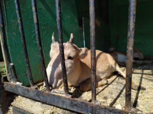 Депутат Александр Клыканов прокомментировал ситуацию с «геноцидом животных»