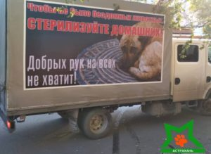 По Астрахани катается «Газель», призывающая стерилизовать домашних питомцев