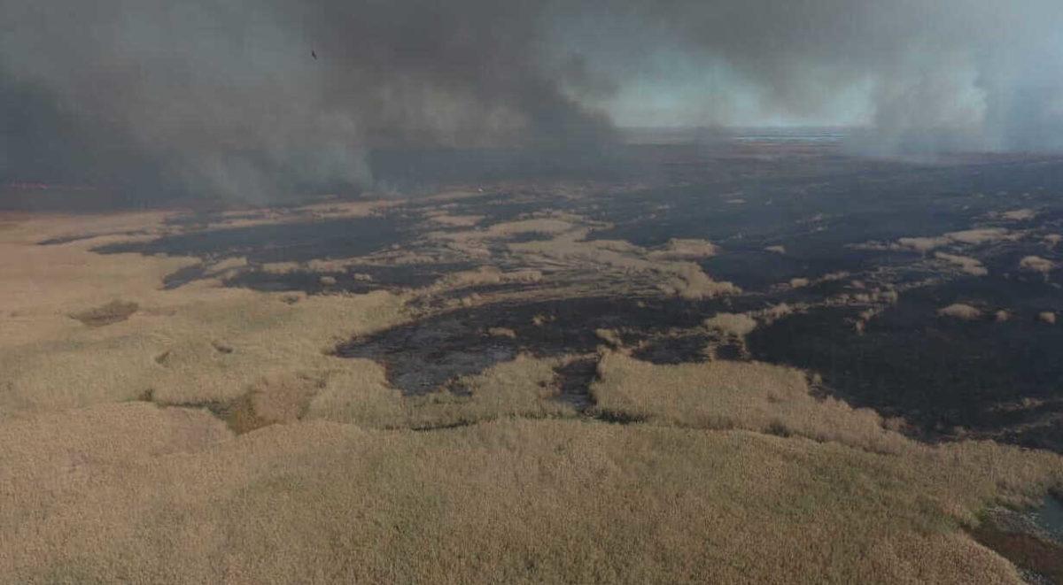 «Ситуация приобретает катастрофический характер»: в Дельте Волги вновь поджигают тростник