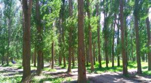 Астраханцев застали за подозрительными манипуляциями с растениями