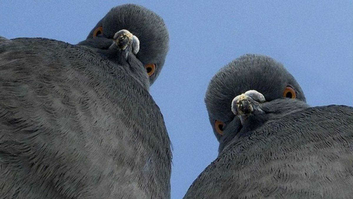 Из центра Астрахани вывезут незаконную голубятню