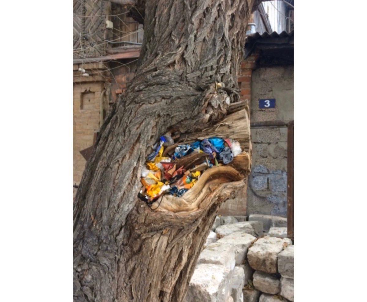 Фото дня: астраханцы используют деревья как мусорки