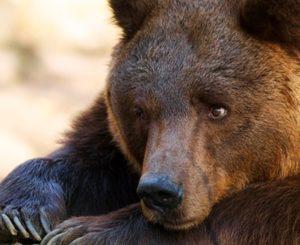 В астраханском зоопарке медведь понервничал из-за арбуза