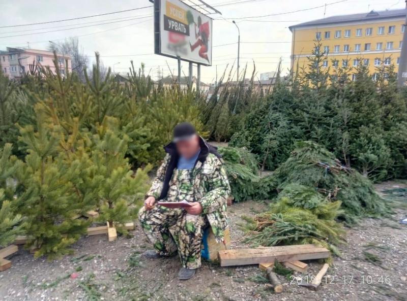 Астраханские елочки вне закона