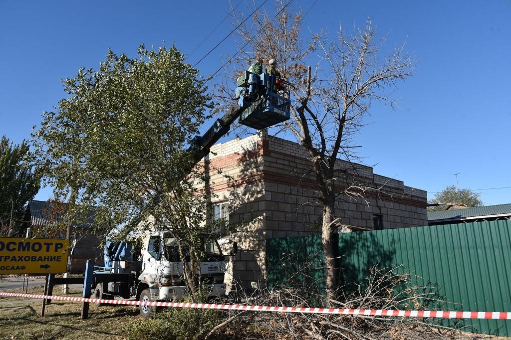 В Астрахани становится меньше деревьев