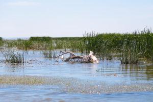 Астраханский заповедник запустит экскурсии по песчаным дюнам и взморью