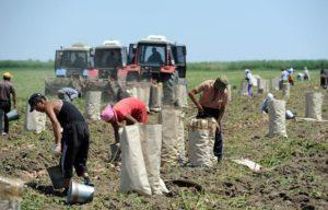Астраханские фермеры вынуждены продавать продукцию себе в убыток