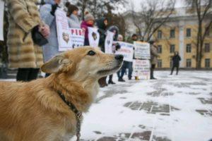 В Астрахани прошел митинг против зоофашизма
