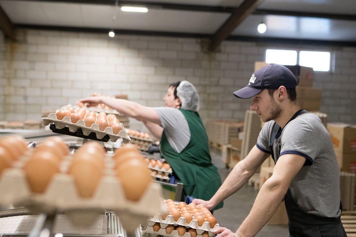 Астраханские птицефабрики ежедневно поставляют на ярмарки 170 тысяч яиц