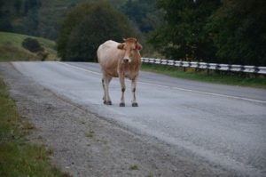 Водитель КамАЗа сломал позвоночник, встретив корову-беспризорницу