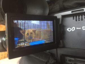 За бездомными собаками в астраханском приюте будут ухаживать осужденные