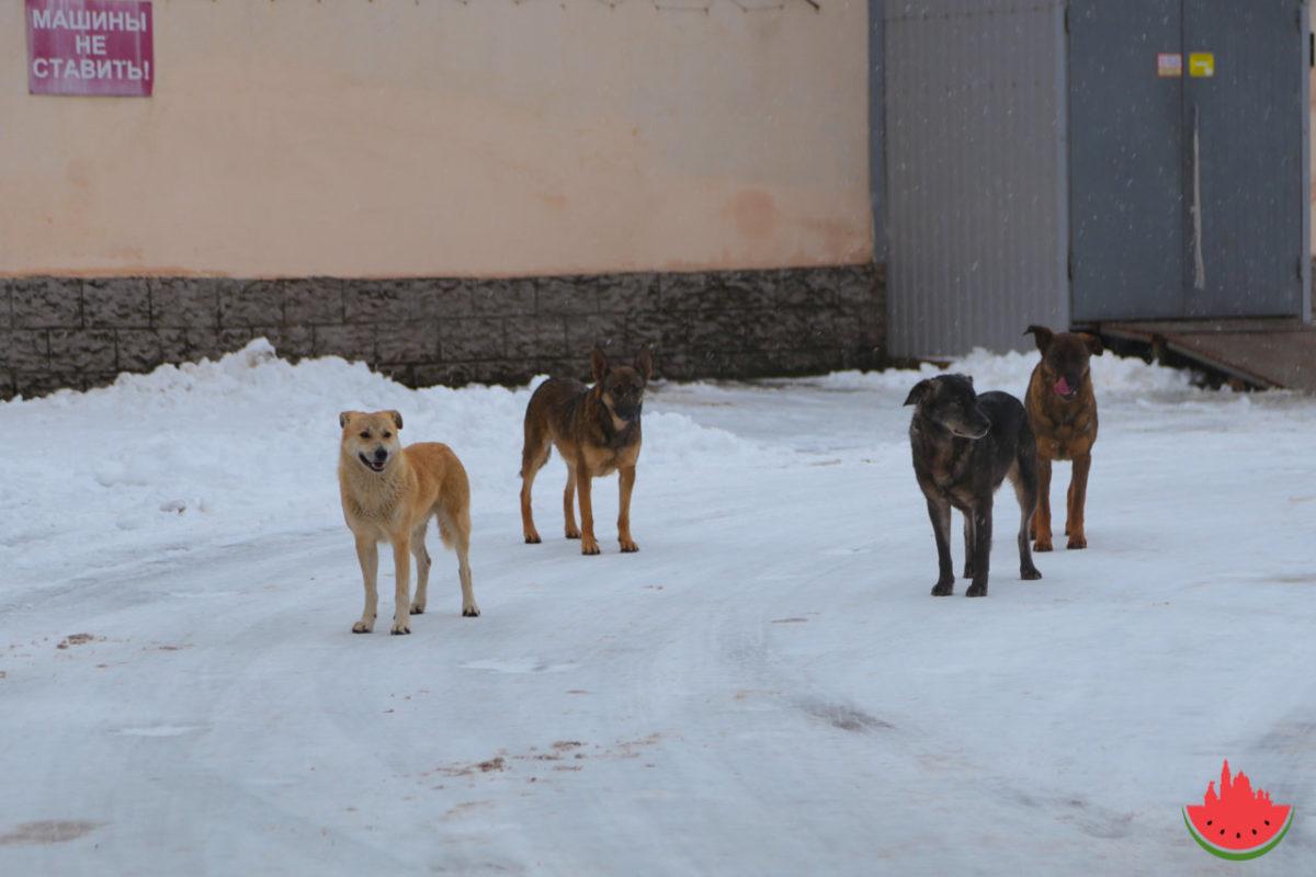Бездомные собаки снова напали на ребенка в Астрахани