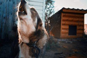 В Астрахани дети отбиваются от бродячих собак петардами