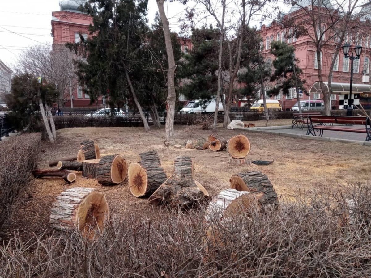 Администрация объяснила причины радикальной обрезки деревьев в центре