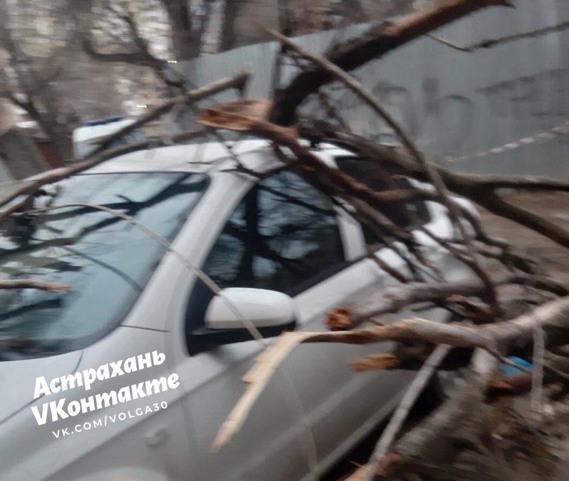 В Астрахани ветер снес дерево прямо на автомобиль