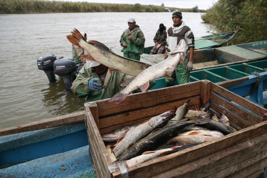 Астраханские рыбодобытчики массово увольняют сотрудников после путины