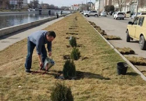 Астраханцы сажают деревья в городе за свой счет