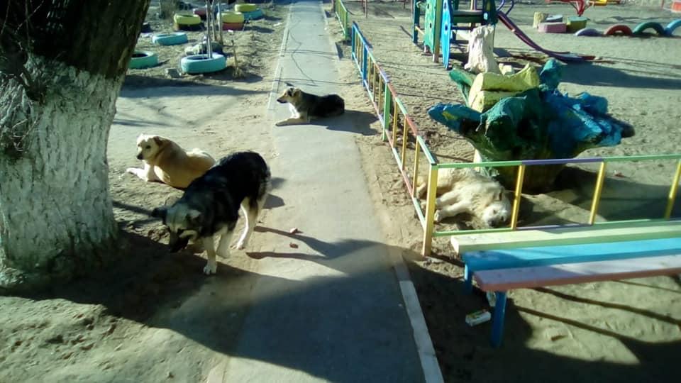 Фото дня: стая собак оккупировала детскую площадку