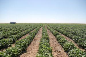 Сельхозработы в Астраханской области начнутся на месяц позже