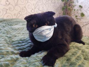 Астраханцы стали чаще болеть коронавирусом после праздников