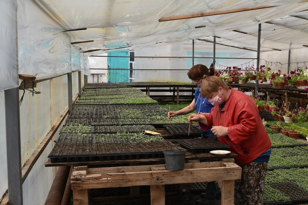 В Астрахани начали высаживать цветы