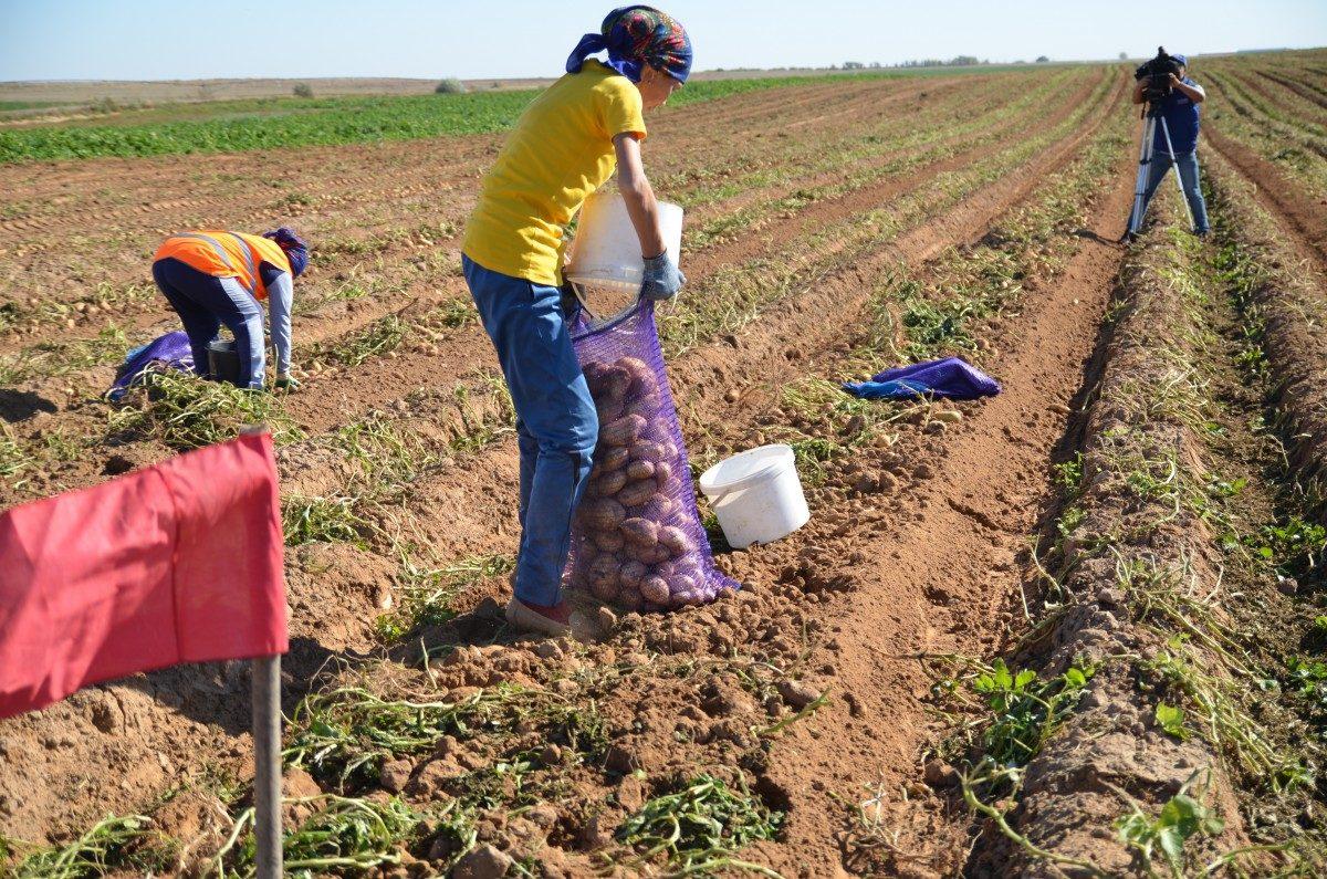 Фермеры Астраханской области трудоустроили более 7,5 тысяч человек во время пандемии