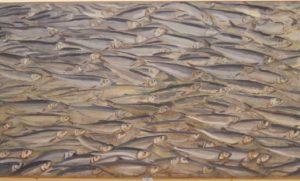Затянувшийся в этом году паводок радует астраханскую рыбу