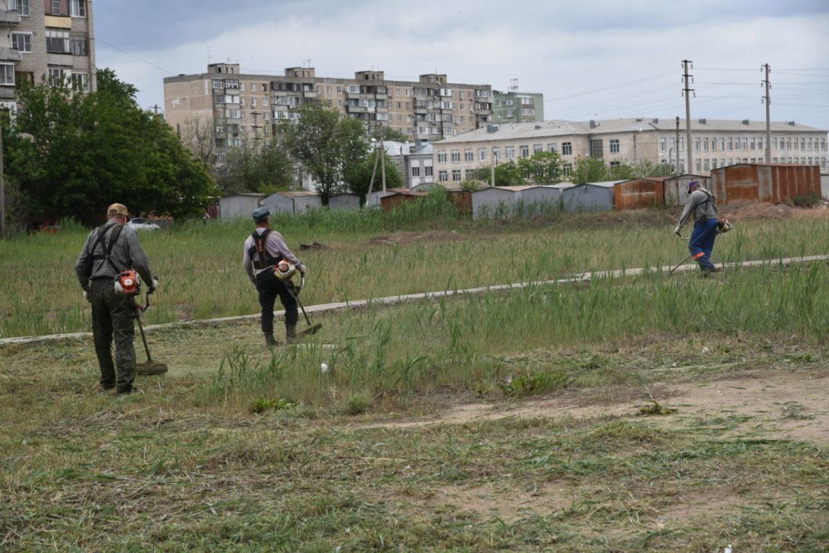По всей Астрахани идет борьба с разросшимся камышом