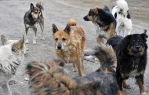Во дворах на улице Аксакова собаки загрызли почти всех кошек