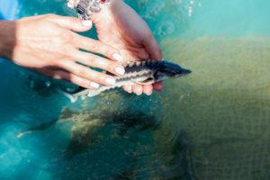 Мошенники попытались получить почти миллион со знакомых астраханских рыбаков