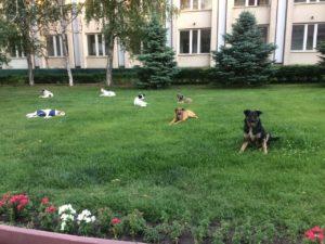 В центре Астрахани собаки отобрали у пенсионерки пакет с продуктами